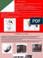 ( 10 Bombas Hidràulicas Scanner 3