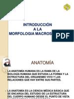 introduccion morfologia macroscopica