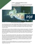 Dermogenys pusillus.pdf
