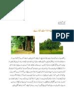 Green Pakistan-Plantation Campaign