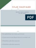 Glandulas Salivales Expo
