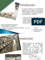 expo ratones final.pptx