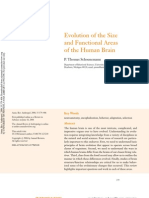 Evolution of the Size and Functional Areas of the human brain (Schoenemann 2006)