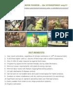 green fodder-hydroponics