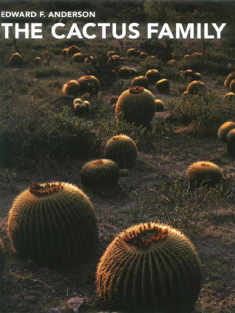 Quisco Cactus 10 Inch Rainstick