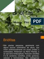 Apresentação1 - Briofitas
