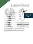 A. Supratrochlearis