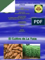 El Cultivo de La Yuca