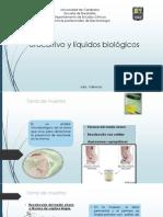 Diapositivas UROCULTIVO