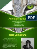 Biodiversidad Animales Asiaticos