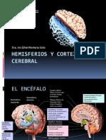 Hemisferios y corteza cerebral.pptx
