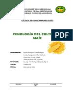 Ciclo Biologico Del Maiz