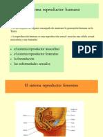 Sistema Reproductor Humano.rmm