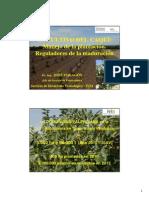 caqui313 plantacion