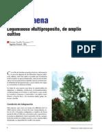 Forestal Leucaena