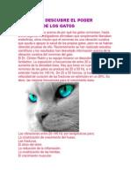La Ciencia Descubre El Poder Curativo de Los Gatos