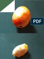 experimentono3germinacindelmangomiel.