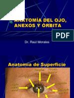 Anatomia y Embriologia Del Ojo[1]