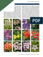 Flora Ornamental de Murcia. Familia Bignoniaceae