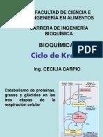 Ciclo de Krebs-BQ II