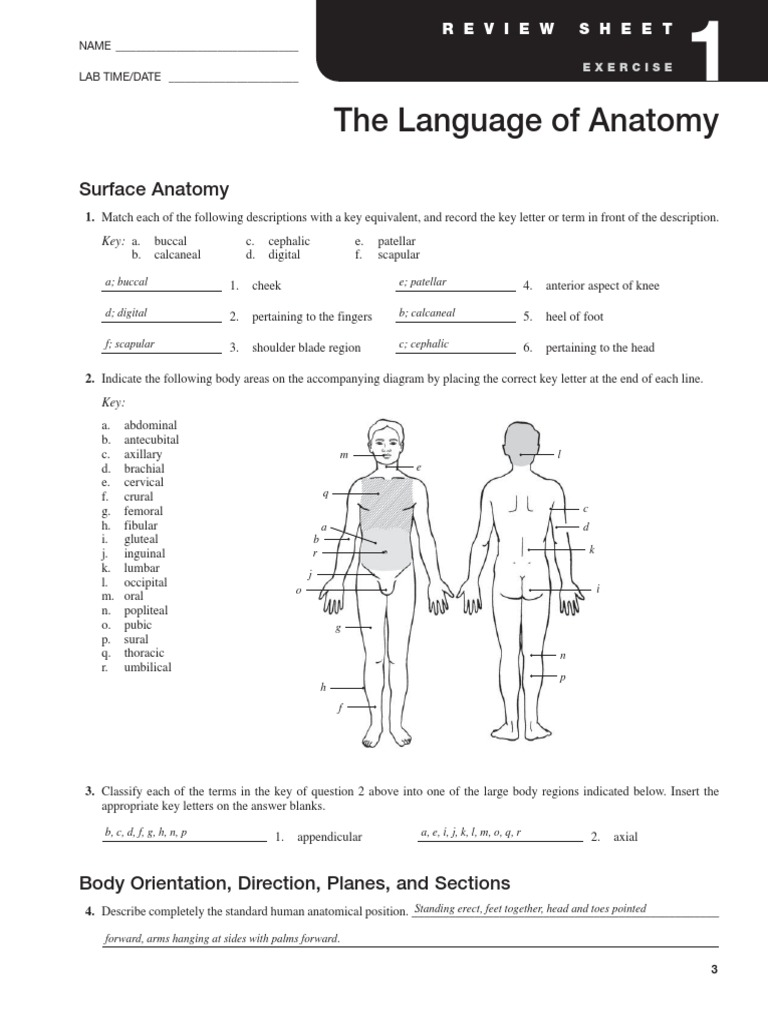 Exercise 1 Language of Anatomy   Anatomical Terms Of ...