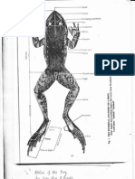 Atlas of the Frog