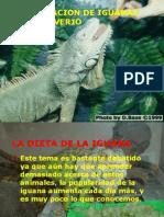 Alimentacion Iguanas