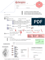 Modelo Informe Colposcópico