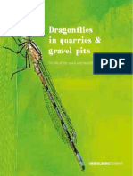 Dragonflies in quarries & gravel pits