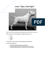 Bull Terrier - Sub-Tipos