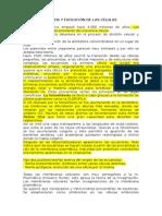 origenyevolucindelasclulas-100515153534-phpapp01