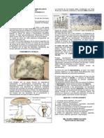 Cultivo y Observación de Moho de Pan