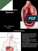 Fatouh - 3er Ano - Sistema Digestivo