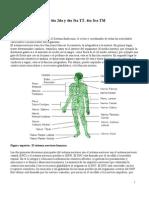 Fatouh - 4to Ano - Sistema Nervioso - Teorico - 2009