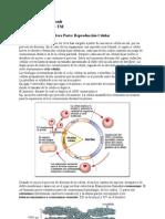 Fatouh - 3er Ano - Reproduccion Celular y Reproduccion Humana 2009