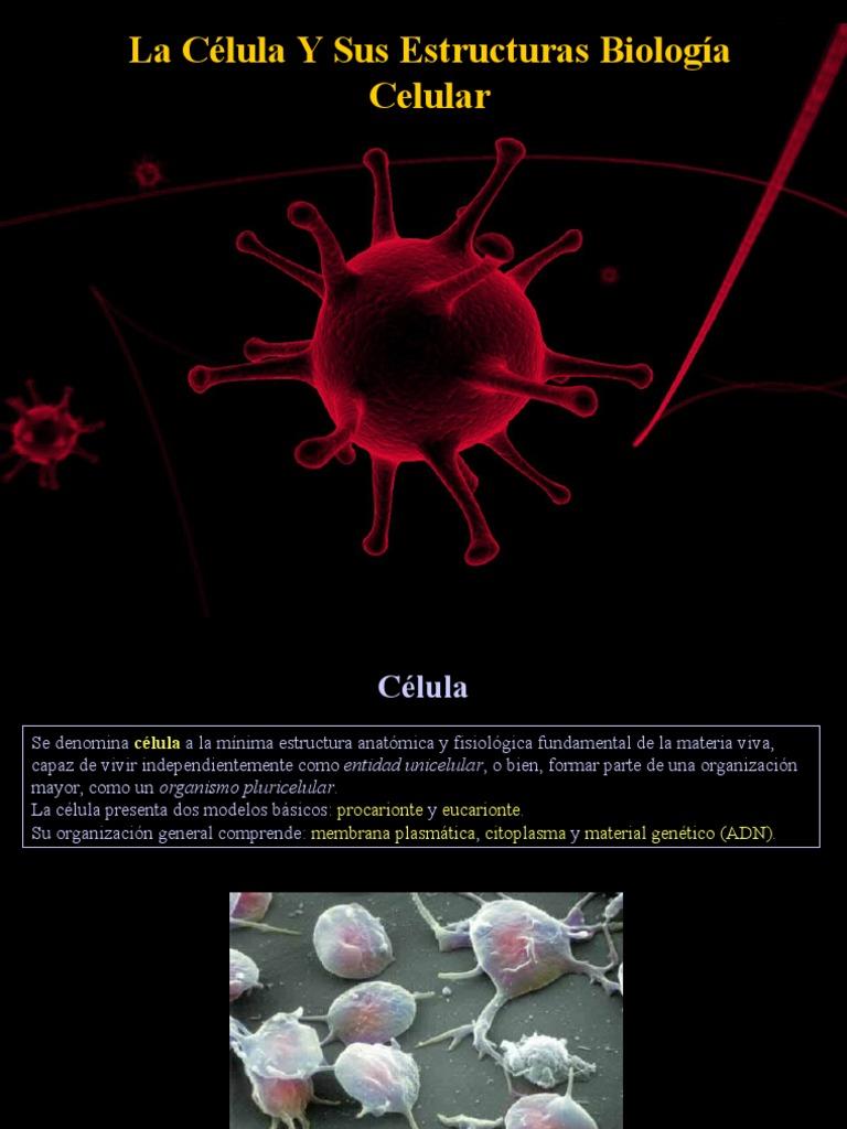 Fatouh 3er Ano Celulas Y Estructuras Celulares Biologia