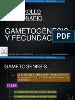gametogc3a9nesis-y-fecundacic3b3n.ppt
