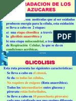 GLICOLISIS Y RESPIRACION CELULAR.ppt