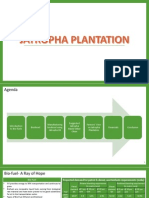 Jatropha Plantation Final PPT