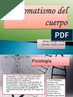 Automatismo del cuerpo.pptx