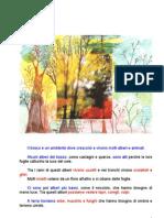 D Il bosco (Geografia e Scienze)