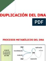 4. Dna.duplicacion