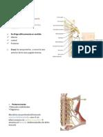 Presentación nervio 11