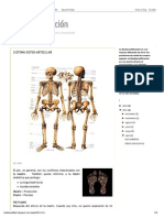 Biodescodificación Sistema Osteo Articular