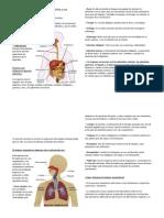 Órganos Que Integran El Aparato Digestivo y Sus Funciones