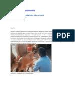 Laparotomia en Caprinos y Vacunos
