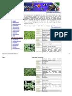 Plantas Flotantes - El Estanque