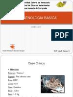 Muerte Fetal en Felino.pdf