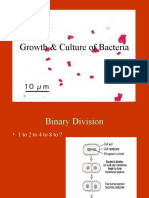 Bacterial growth & conditions