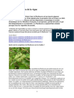 Le Phylloxera de La Vigne